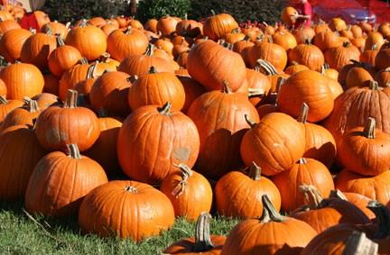 pumpkin-patch-la-crescenta-real-estate