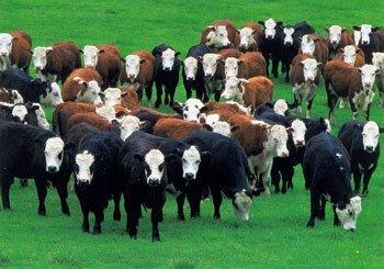 herd-mentality-real-estate