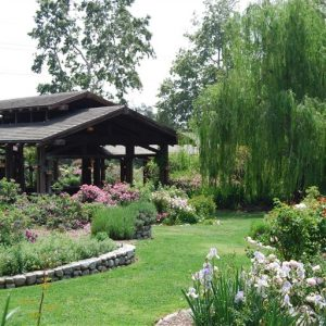 Maple at Descanso Gardens